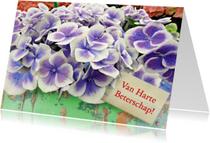 Beterschapskaarten - Beterschap Hortensia Bloemen op steigerhout
