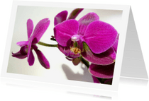 Bloemenkaarten - Bloemen volpaarse orchidee