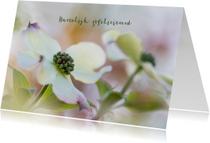 Bloemenkaarten - Bloemenkaart  Cornus