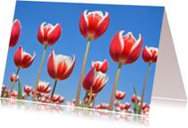 Bloemenkaarten - Bloemenkaart - RedandWhite
