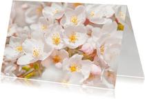 Bloemenkaarten - Bloemenkaarten-Sakurabloemen