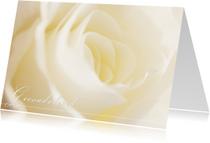 Condoleancekaarten - Close-up van een witte roos