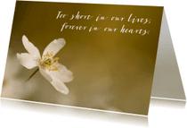 Condoleancekaarten - Condoleance wit anemoontje AS