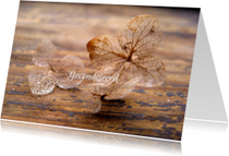 Condoleancekaarten - Condoleancekaart, Lichaam en ziel- hortensia foto