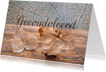 Condoleancekaarten - Condoleancekaart met hortensia