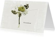 Condoleancekaarten - Condoleancekaart Wit Groene Roos Sterkte