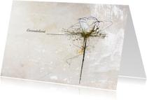 Condoleancekaarten - Condoleancekaart Witte Roos Deelneming