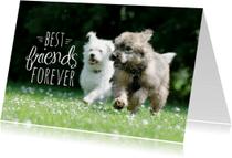 Dierenkaarten - Dieren honden vriendschap