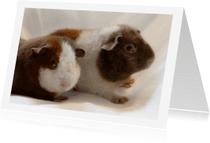 Dierenkaarten - Dieren schattige cavia