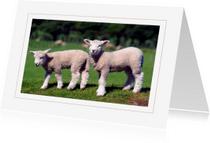 Dierenkaarten - Dierenkaart Lammetjes