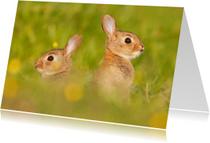 Dierenkaart met konijnen in een veld