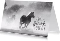 Dierenkaarten - Dierenkaart paarden vriendschap