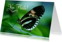 Dierenkaarten - Dierenkaart Verjaardag Senior Vlinder