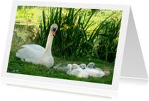 Dierenkaarten - Dierenkaart Zwaantjes in gras
