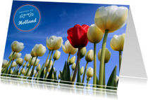 Ansichtkaarten - Groeten uit Holland LXII