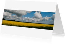 Ansichtkaarten - groninger koolzaadveld