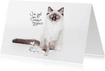Valentijnskaarten - Kat-en-muisspel.