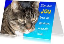 Dierenkaarten - kater met blauwe achtergrond