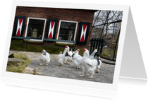 Dierenkaarten - Kippen op de boerderij