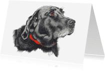 Dierenkaarten - Labrador 2