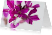 Bloemenkaarten - Lentebloem