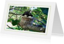 Dierenkaarten - Lentekaart Jonge vogels