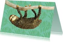 Zomaar kaarten - Luiaard hangt aan een tak