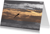 Condoleancekaarten - meeuw