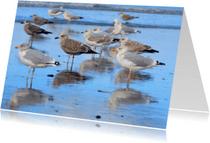 Zomaar kaarten - Meeuwen aan zee