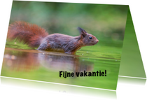 Vakantiekaarten - Natuur - eekhoorn