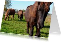 Dierenkaarten - Paardenkaart Kudde