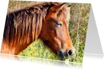 Dierenkaarten - Paardenkaart Pony in de zon