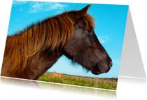 Dierenkaarten - Paardenkaart Pony in herfstzon
