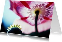 Bloemenkaarten - Papaver en roze bloem-isf
