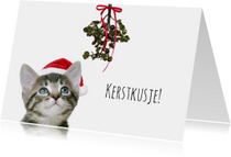 Kerstkaarten - Poesje onder maretak-isf