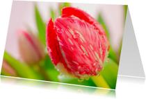 Bloemenkaarten - Rode tulp met druppels