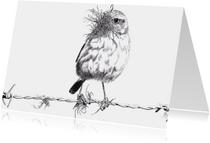 Kunstkaarten - 'Roodborsttapuit' (vrouwtje)