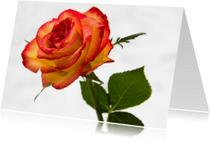 Bloemenkaarten - roos blanco