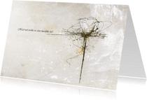 Condoleancekaarten - Roos Wit Deelneming - JD