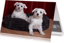 Dierenkaarten - schattige hondjes