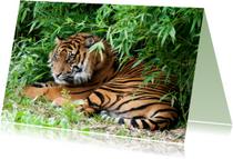 Dierenkaarten - siberische tijger