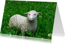 Dierenkaarten - Speelgoed-schaap in het gras