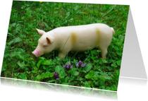 Dierenkaarten - Speelgoed-varken in het gras