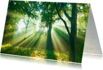 Condoleancekaarten - Sterkte Elswout-Light