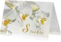 Sterkte kaarten - Sterkte-Orchideen