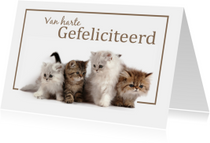 Verjaardagskaarten - Van harte Gefeliciteerd met katten