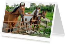 Verjaardagskaarten - Verjaardag 3 paardjes bij hek
