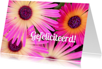Verjaardagskaarten - Verjaardagskaart Geelroze Bloemen