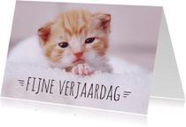 Dierenkaarten - Verjaardagskaart Kitten