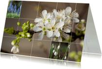 Zomaar kaarten - voorjaarskaart